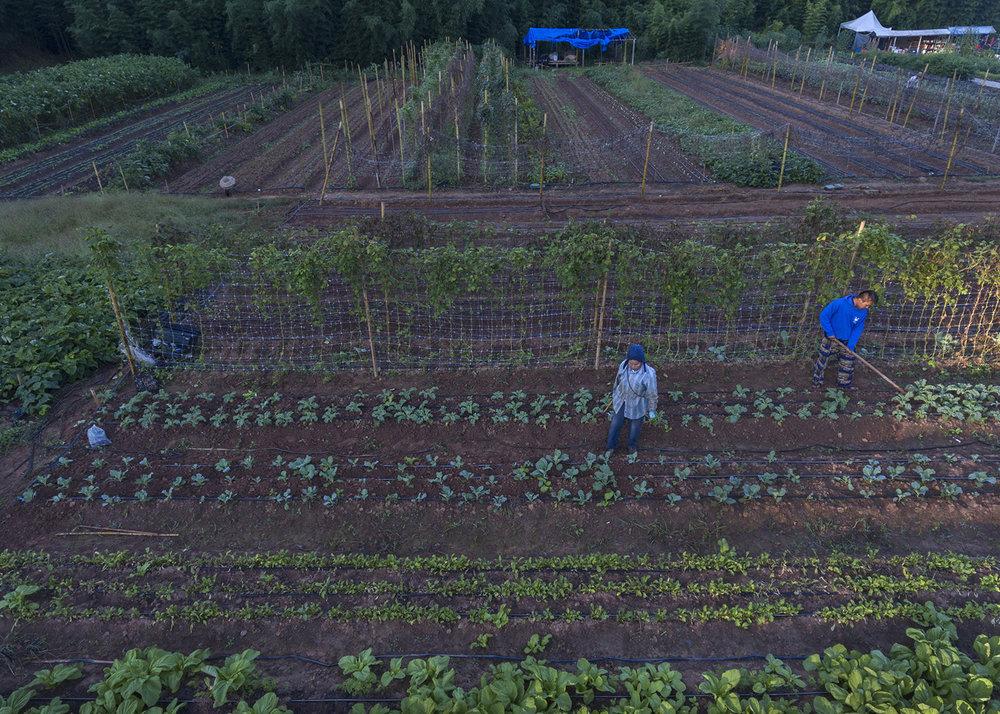 Global Growers_0084.jpg