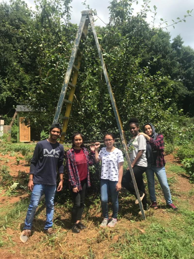 The Summer Garden Team members who assisted the pear harvest