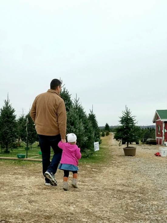hunting for a Christmas tree!