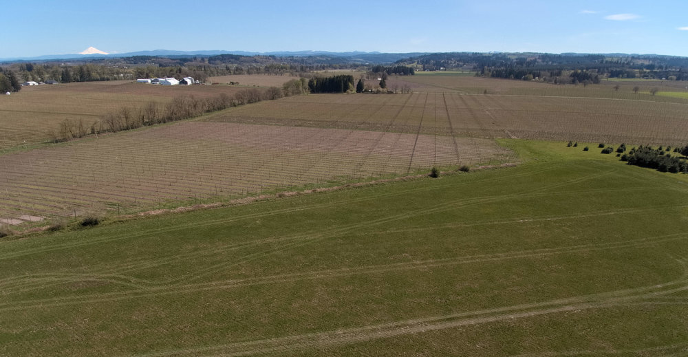 Grain & Hops, Pre-Seeding, 4/21