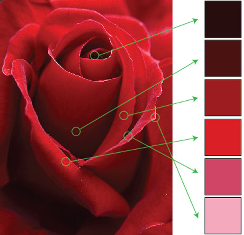 Red Rose Color Samples | VanillaArts.com