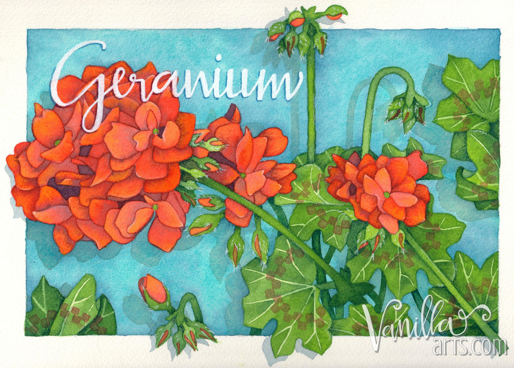 """Checkerboard Geranium"" H2oh! lesson for Aug 2016. Learn to apply your coloring skills to watercolor. 