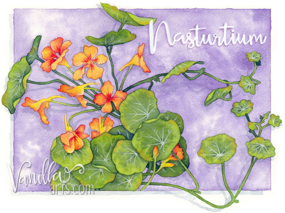 """Nasturtium"" a beginner watercolor project for H2Oh! class. Teaching marker students to apply their coloring skills to watercolor paints. 