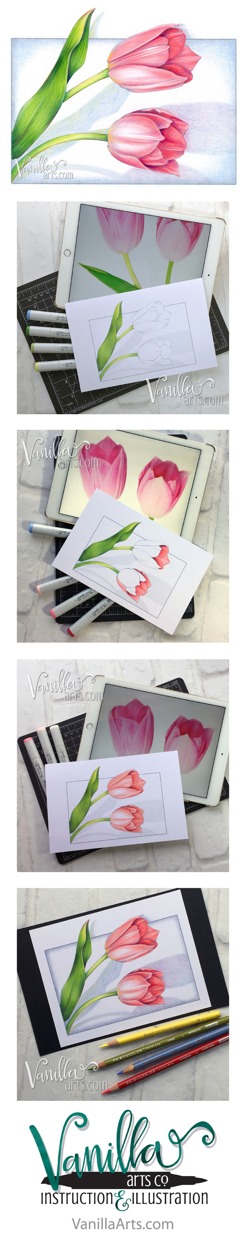 """Two Tulips"" week 11 project for Marker Painting Foundations online Copic course for beginners. We start with simple blending and work our way towards realism! Begin the course anytime, work at your own pace. 