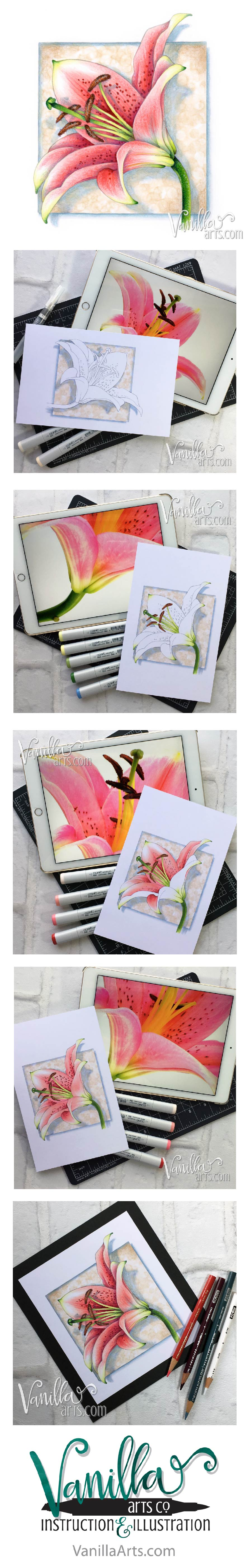 """Lily Blossom"" in Copic and Prismacolor pencil. Vanilla Arts digital stamps are designed especially for markers, colored pencils, and even watercolor! Wide open areas allow you the necessary space to blend and express your creativity. 