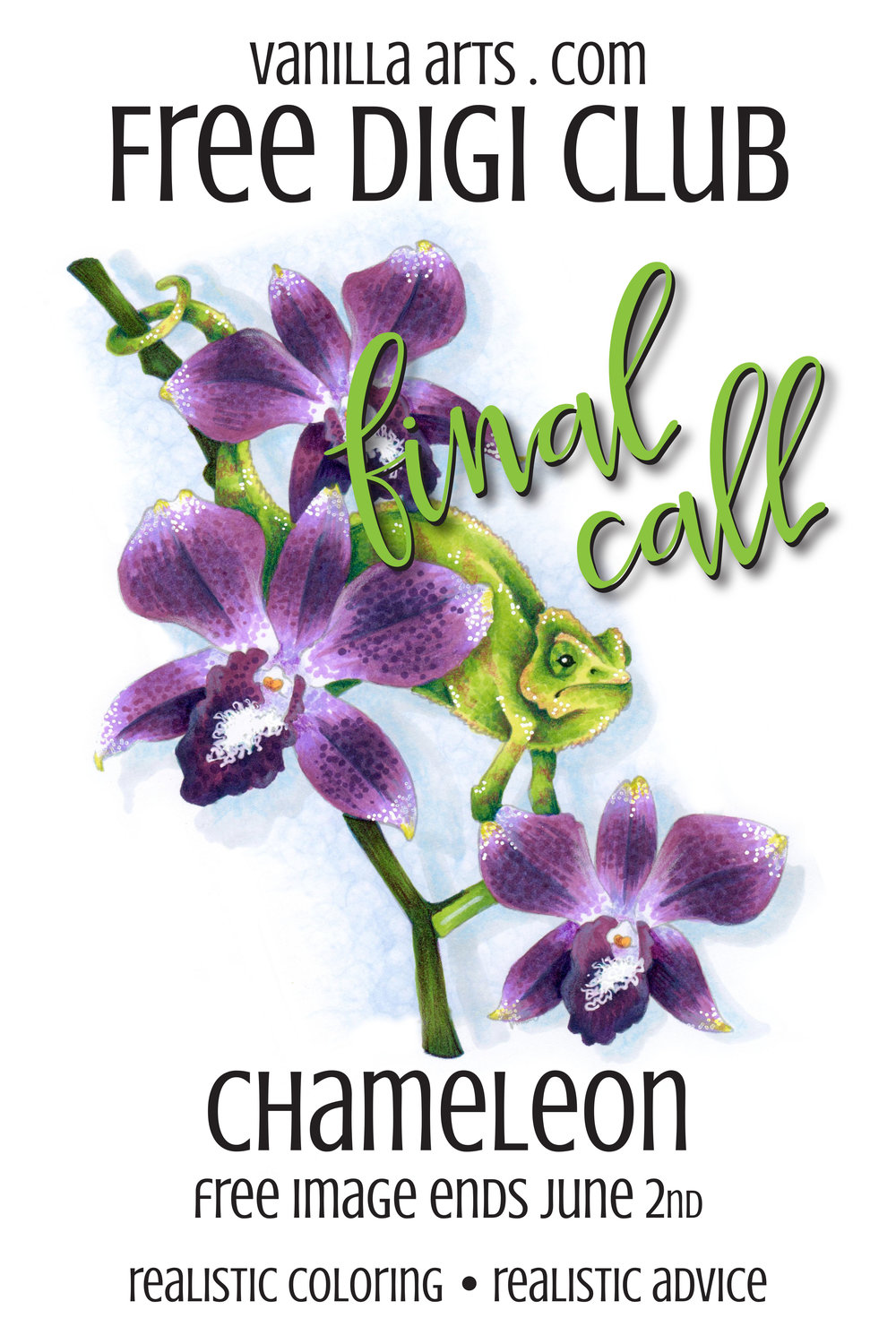 """Final Call for """"Chameleon""""- a FREE digital stamp that's perfect for Copic Marker, colored pencils, even watercolor! Get your downloadable copy at VanillaArts.com"""