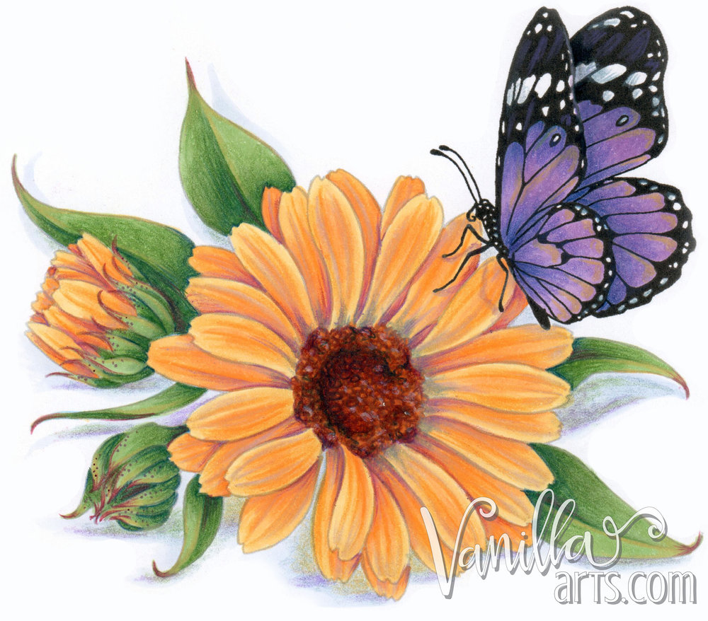 """Get your FREE copy of the """"Calendula"""" digital stamp in September 2017. Vanilla Arts Co stamps are designed especially for use with Copic Markers, colored pencil, even watercolor. Join the Free Digi Club for a new stamp every month! 