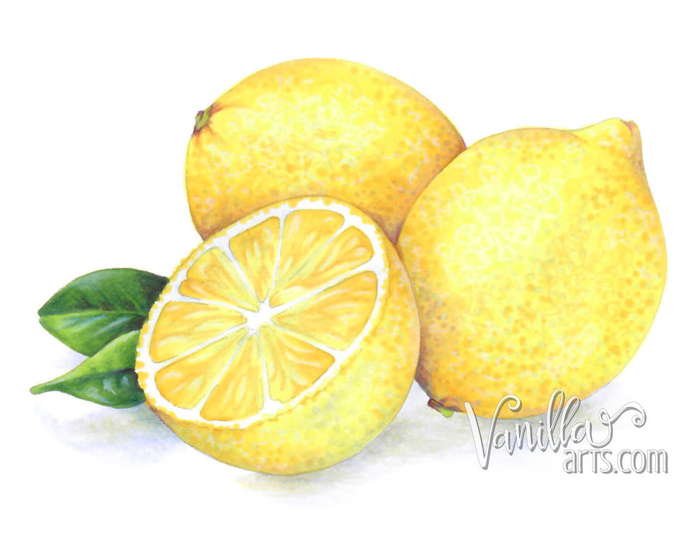 """Get your FREE copy of the  """"Lemon Zest""""  digital stamp in April 2018. Vanilla Arts Co stamps are designed especially for use with Copic Markers, colored pencil, even watercolor. Join the Free Digi Club for a new stamp every month! 