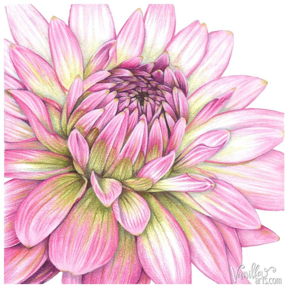 """""""Dahlia"""" by VanillaArts.com"""