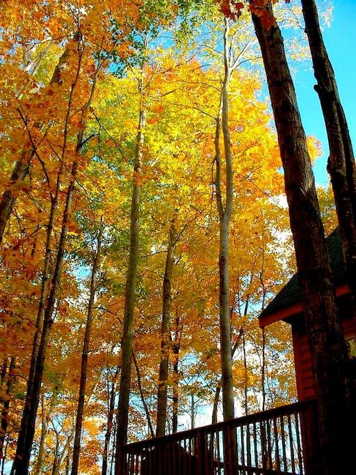 Cedar Lake Color.jpg