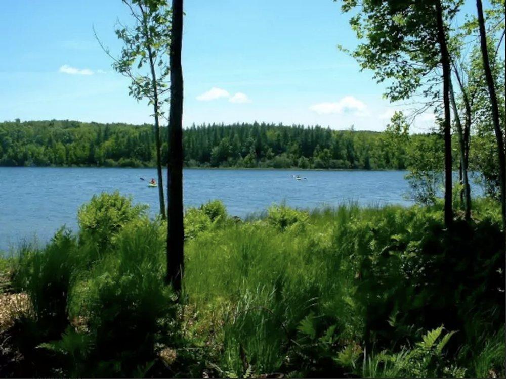 Cedar Lake skyline.jpeg