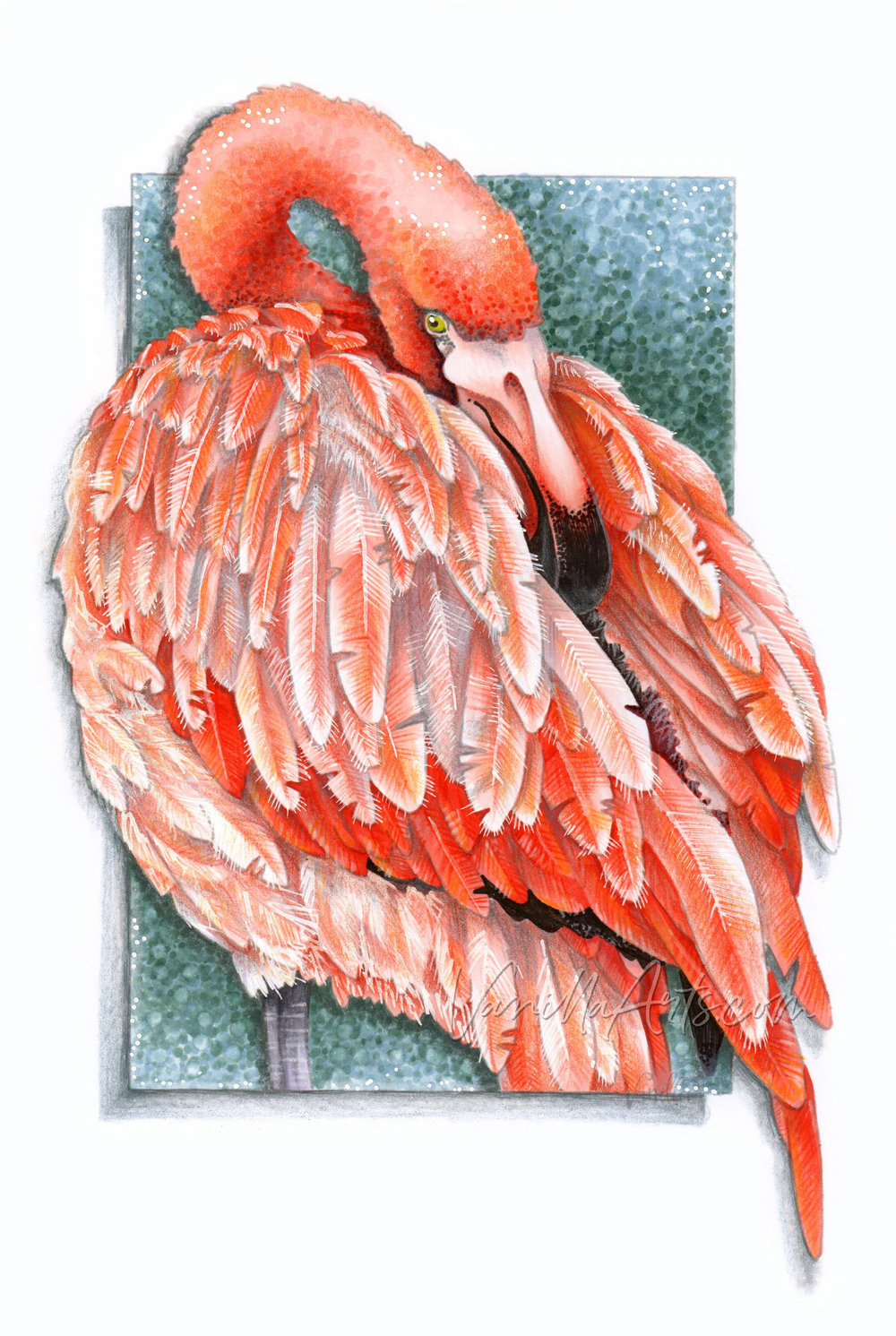 """""""Flamingo Feathers"""" an advanced Copic Marker coloring project from Amy Shulke of VanillaArts.com. Learn to why pink is different than light red and how to shift temperatures for maximum depth. 