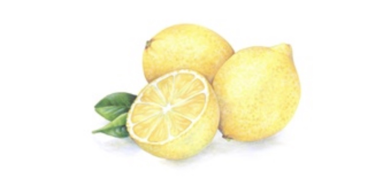 Lemon Zest -  a 2.5 hour online class which walks you through underpainting for depth and dimension along with how to treat soft and sensitive colors like yellow for maximum realism.