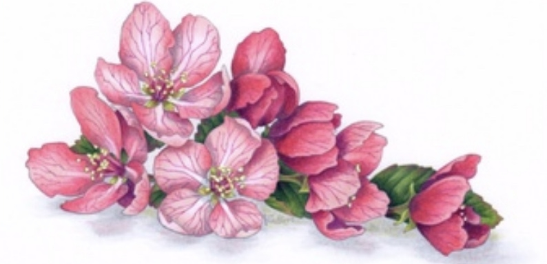 Sakura Blossom -  a 2 hour online class which introduces you to Amy's floral techniques, complex color runs, and color kissing.