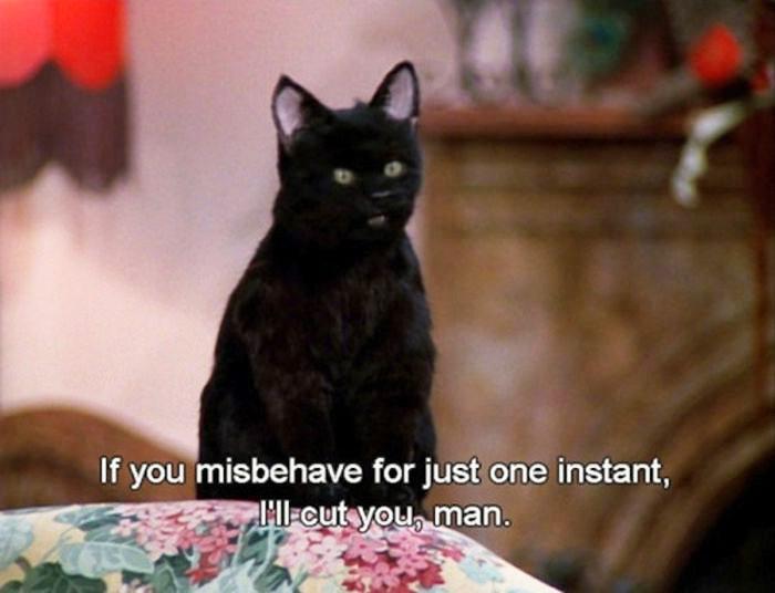 Blackcat20.jpg