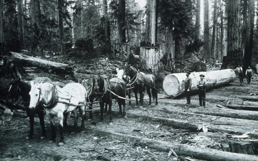 Photo Courtesy of Seattle Municipal Archives