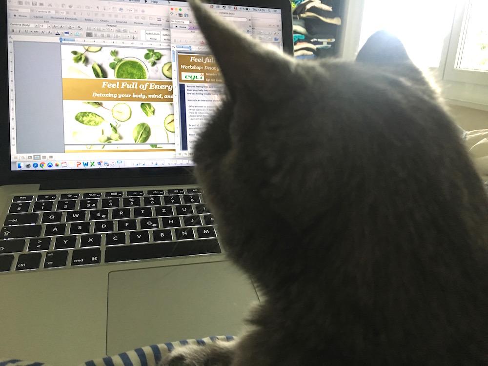 Personal assistant cat mimi detox workshop.jpg