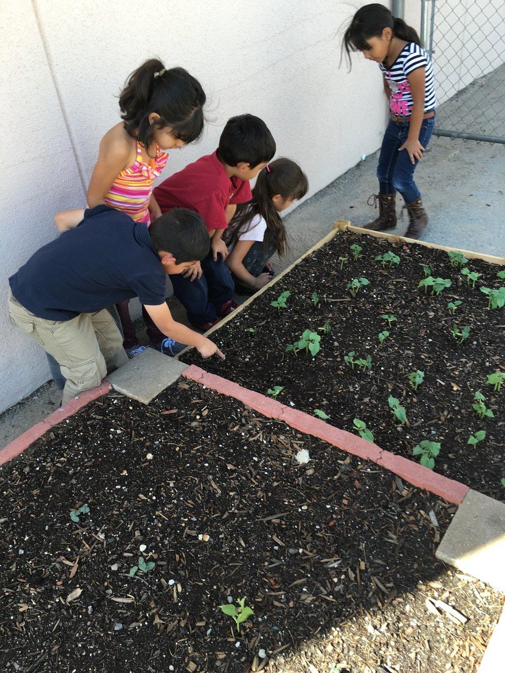 daycare garden.jpg