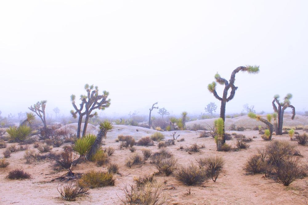 "Photo I took while camping at Joshua Tree National Park, the location for the ""Get Lost, Do Art"" Case of the Nomads Residency"