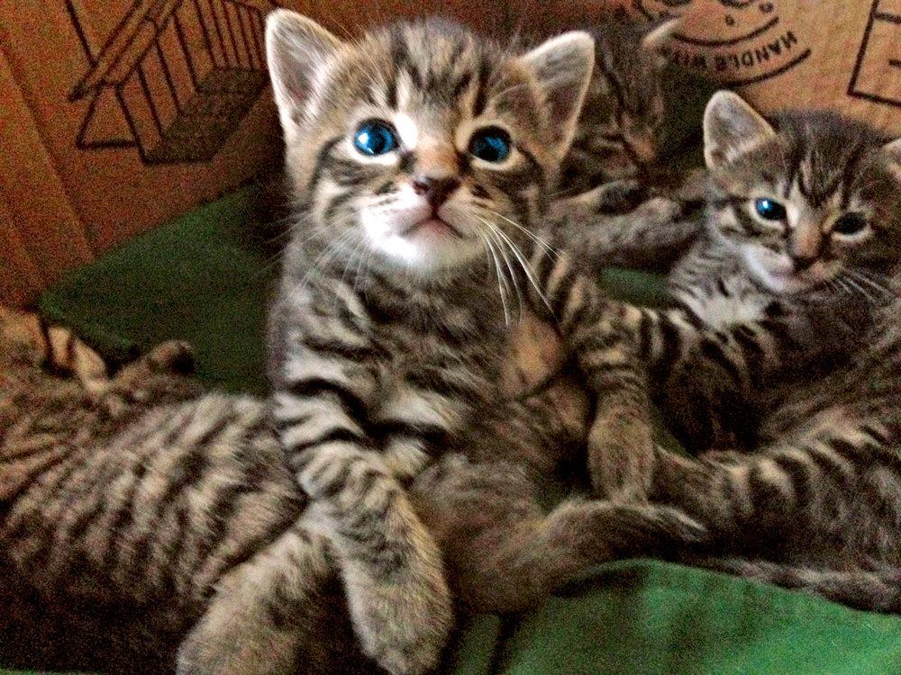 NZ Cats.jpg