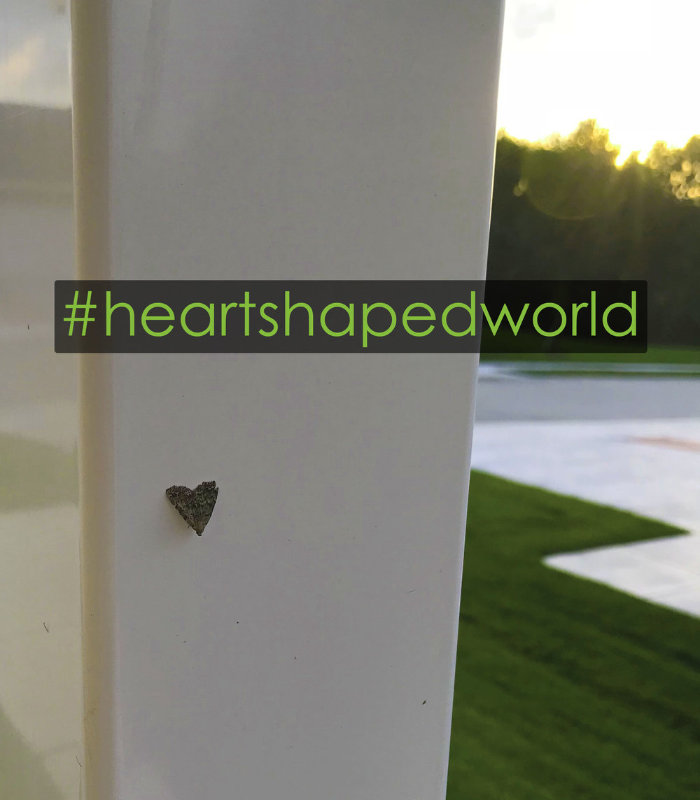 Keep your eyes open for the heart shapes in the world, take a photo, share it and add #heartshapedworld  Let's see how many we can collect, will you join me?