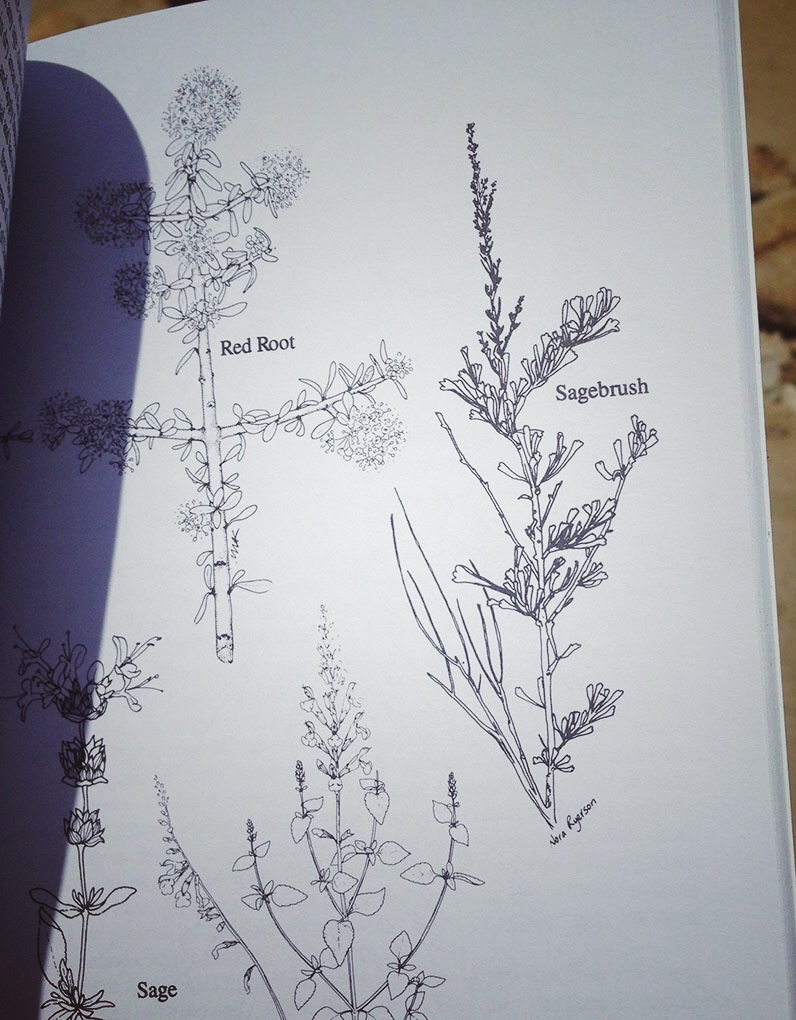 Encampment Library book to help identify plants in the desert. I was seeking Sage.