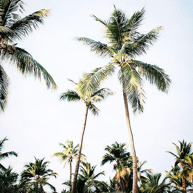 Hello Florida ☀️🌴🌊 . . . . . #florida #tampabay #photooftheday #justgoshoot #styleblogger #travelblogger #lifestyleblogger #pghblogger