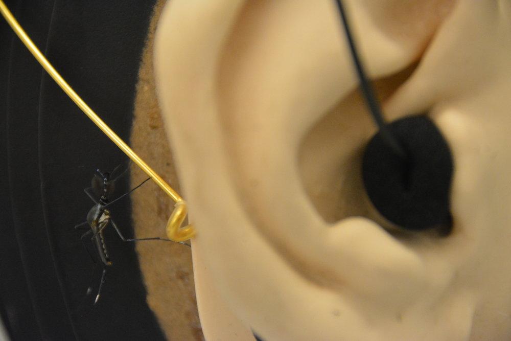 Recording mosquitos