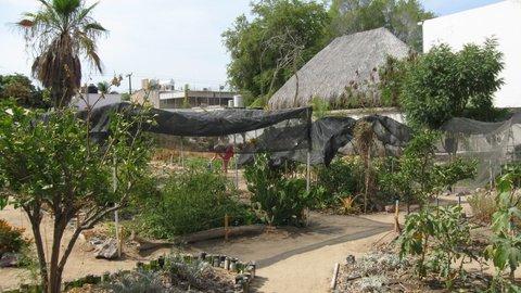 jardin-urbano-curso-y-capacitación-huertos-proyecto-christy-walton.jpg
