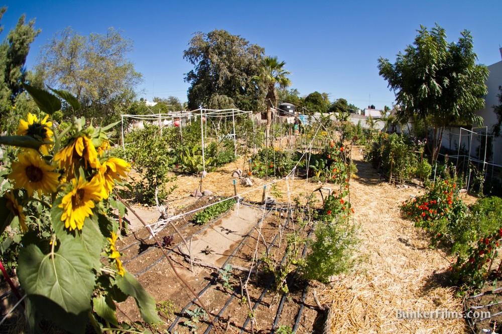 raiz-de-fondo-curso-jardines-urbanos-alimentacion-sana-proyecto-christy-walton.jpg