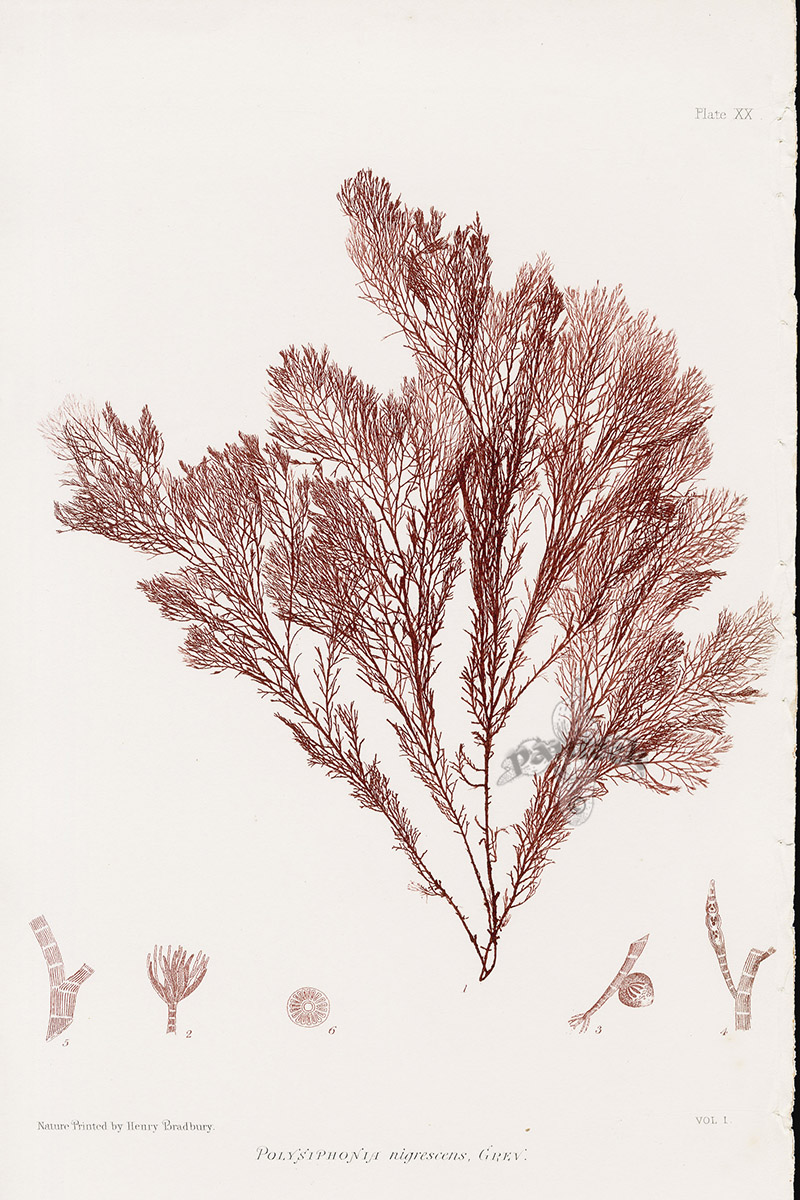 A nature print bookplate by Henry Bradbury via panteek.com