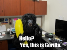 BusinessGorilla