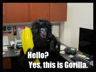 businessgorilla.jpg