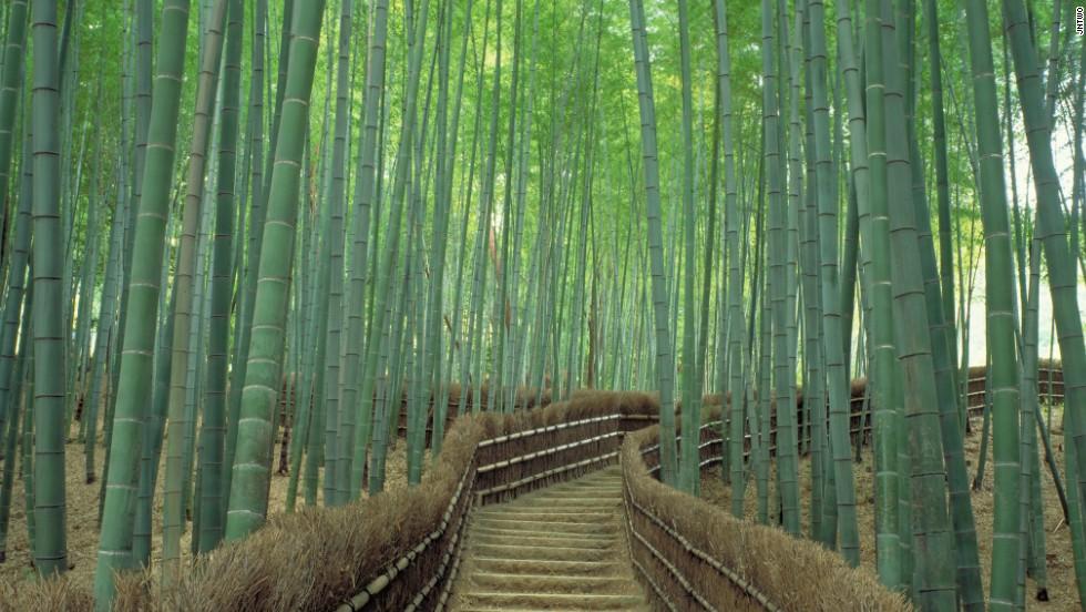 140807210033-1-sagano-bamboo-forest-horizontal-large-gallery.jpg