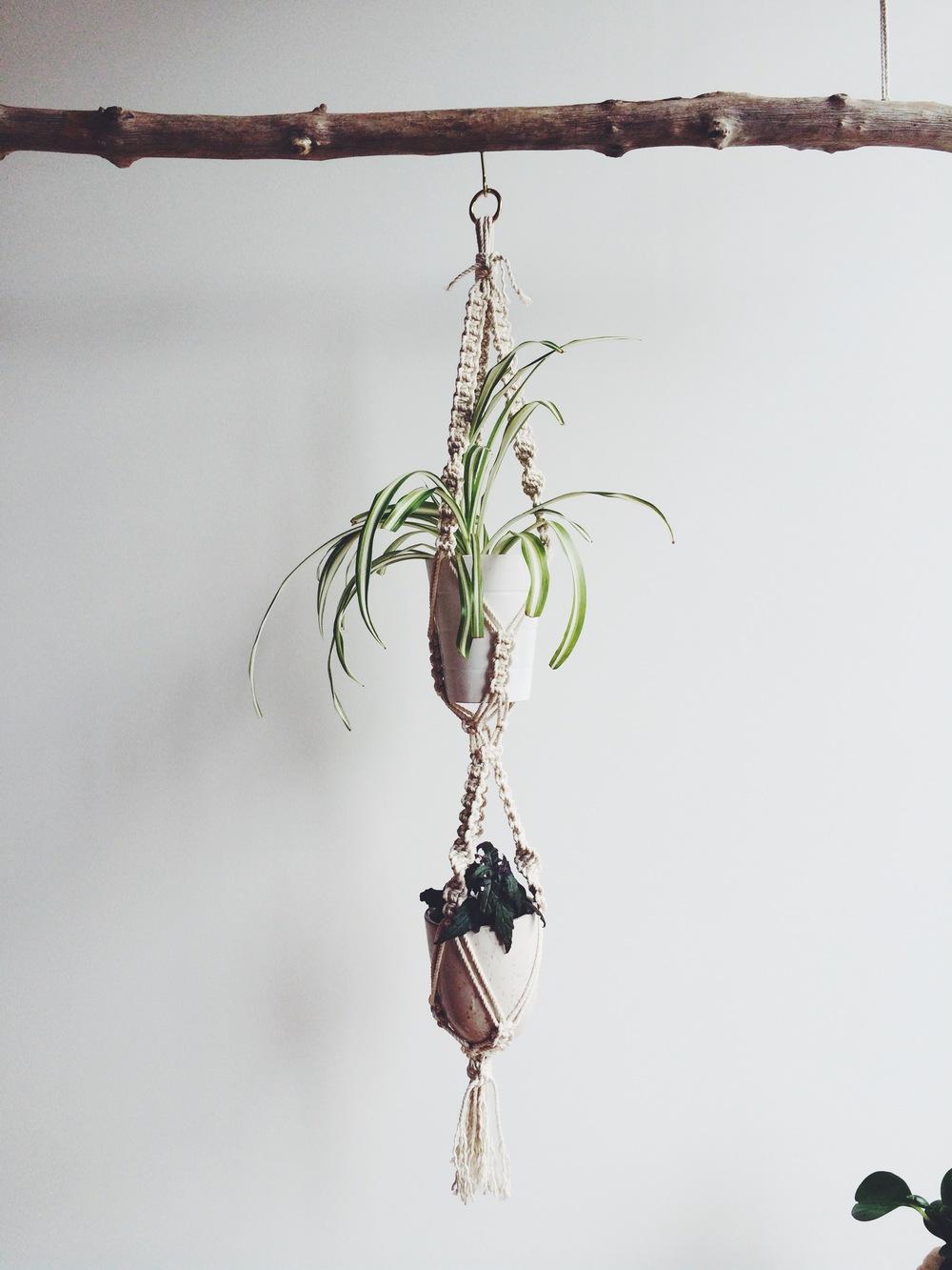 double_plant_hanger.JPG