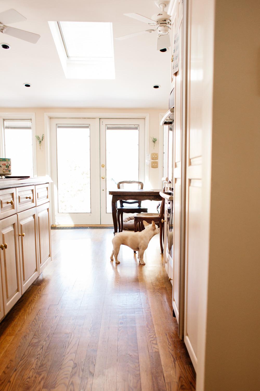 french bulldog | lifestyle photography | Jennifer Tippett