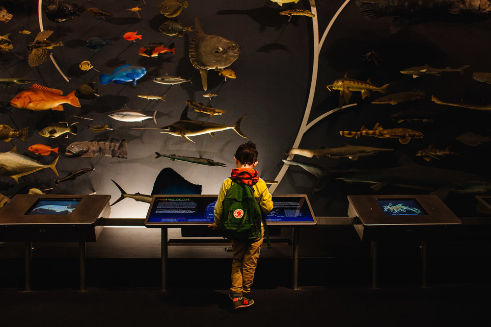 Museum of Natural History NYC | Jennifer Tippett Photography | lifestyle photographer