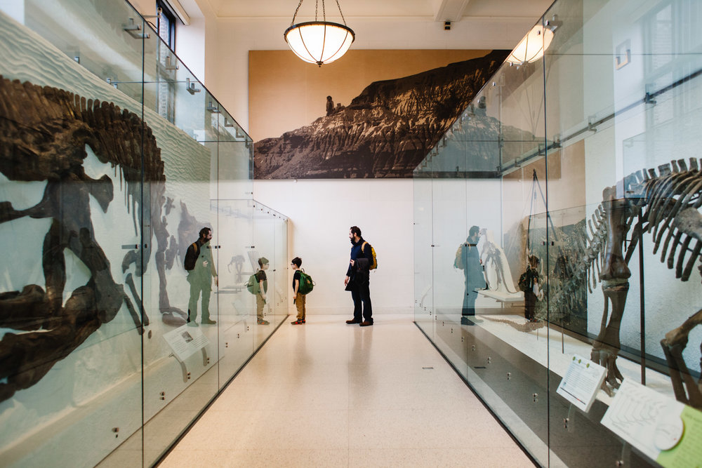 365 project | American Museum of Natural History | Jennifer Tippett Photography