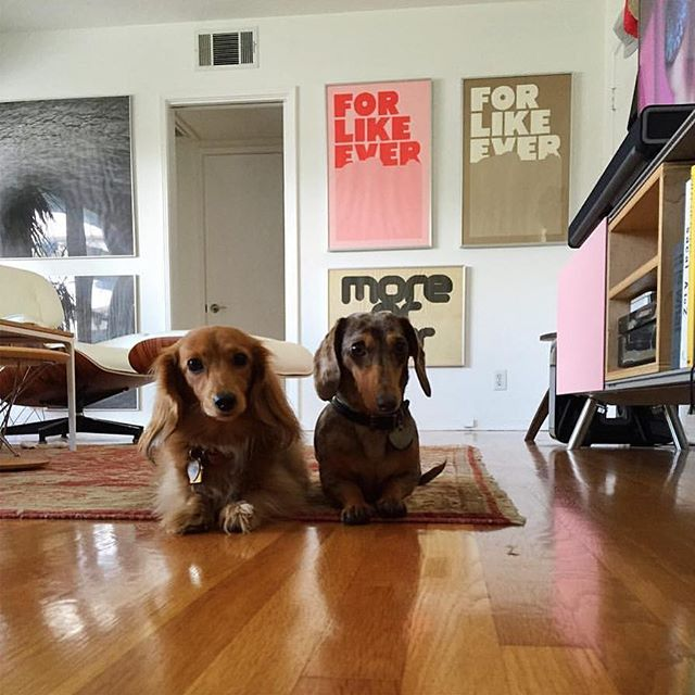Two sweet pups with two of our prints. #Repost @briemalie • • • • • • • home sweet home 💛 @ikandarian #eames #vitra #interiordesign #dachsund @superrural