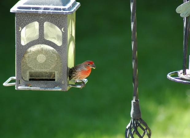 wildlife_bird.png