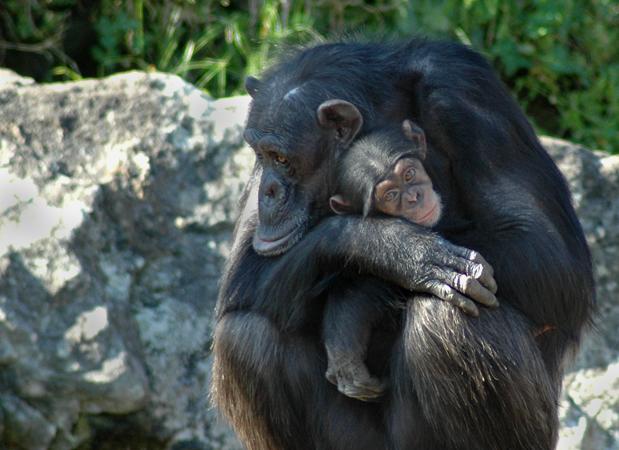 wildlife_monkeys.png