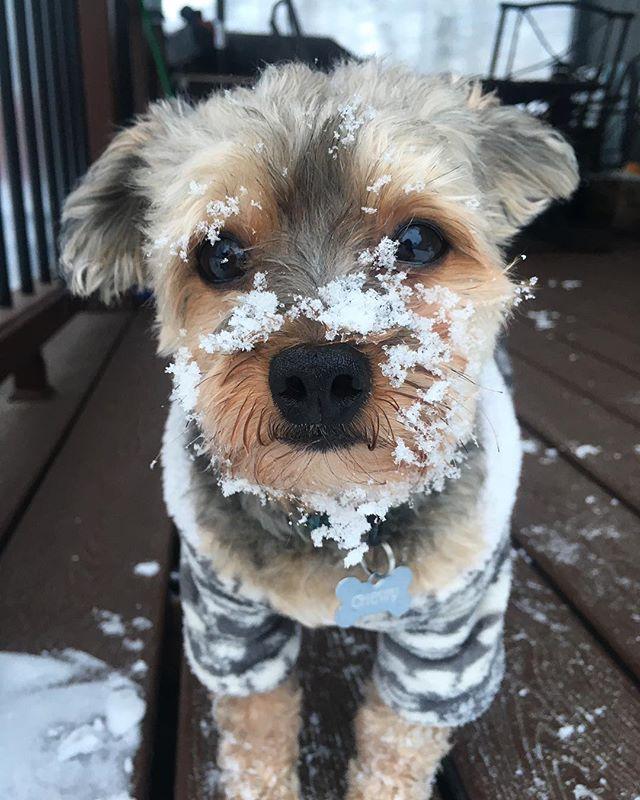 snow doggo 🐕❄️❤️