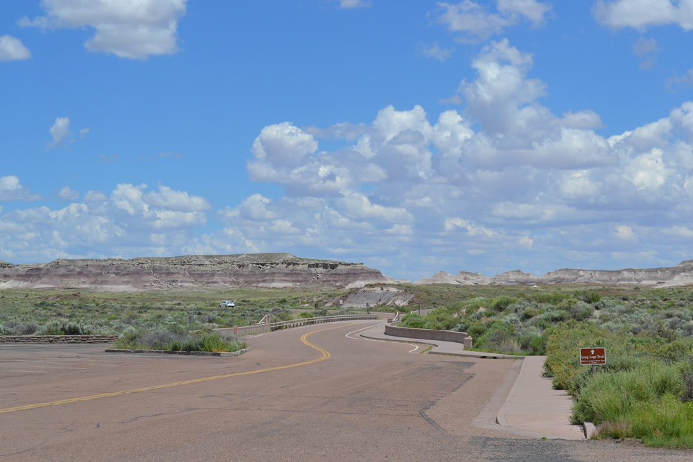 The beautiful Petrified forest  national park.