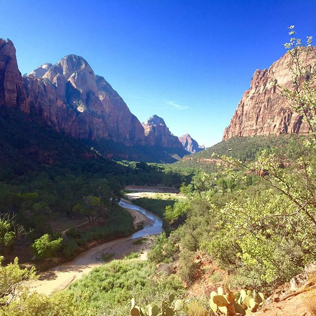 •• can't even believe this is a real place on earth. No pictures can do it justice. In love. •• #zion #utah #nationalparks #nature #hiking