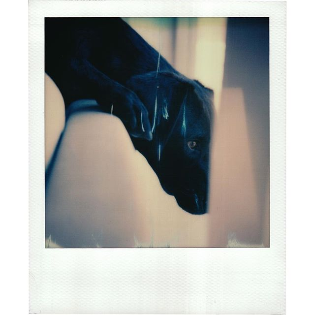 Klaus on polaroid