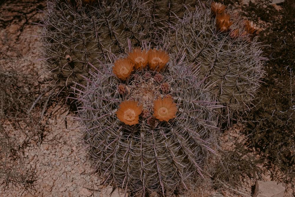 www.ramonsantacruz.com-4.jpg
