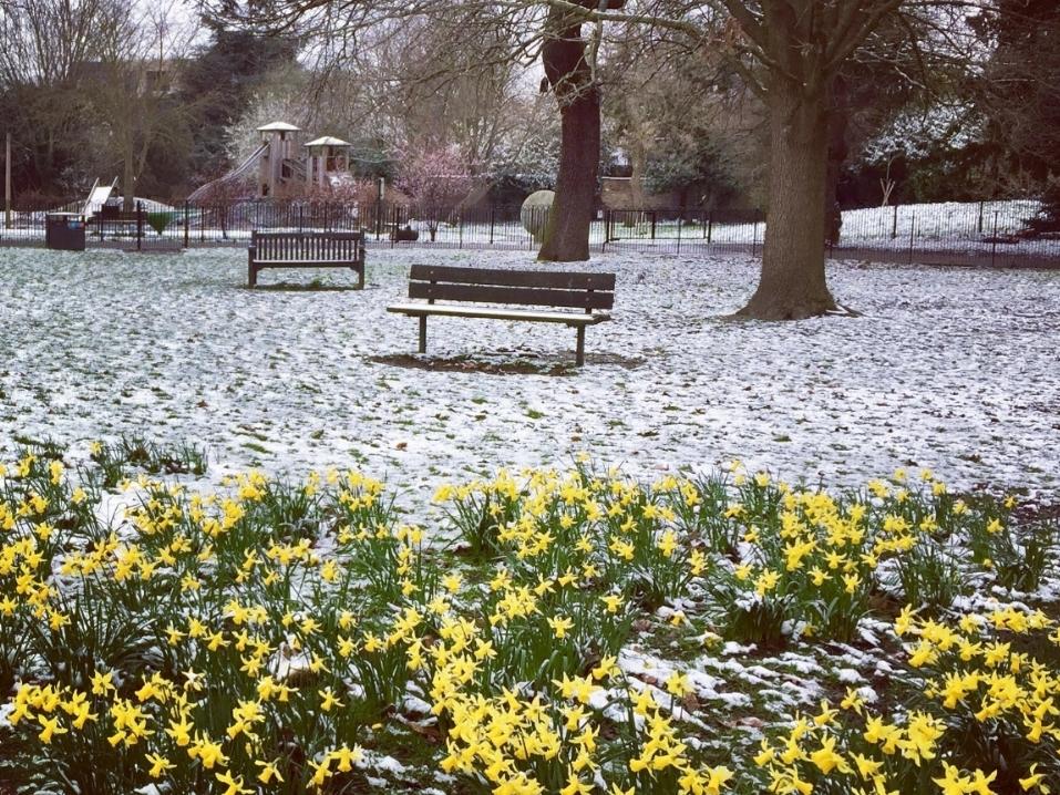 daffodil_positivity_oliviaread