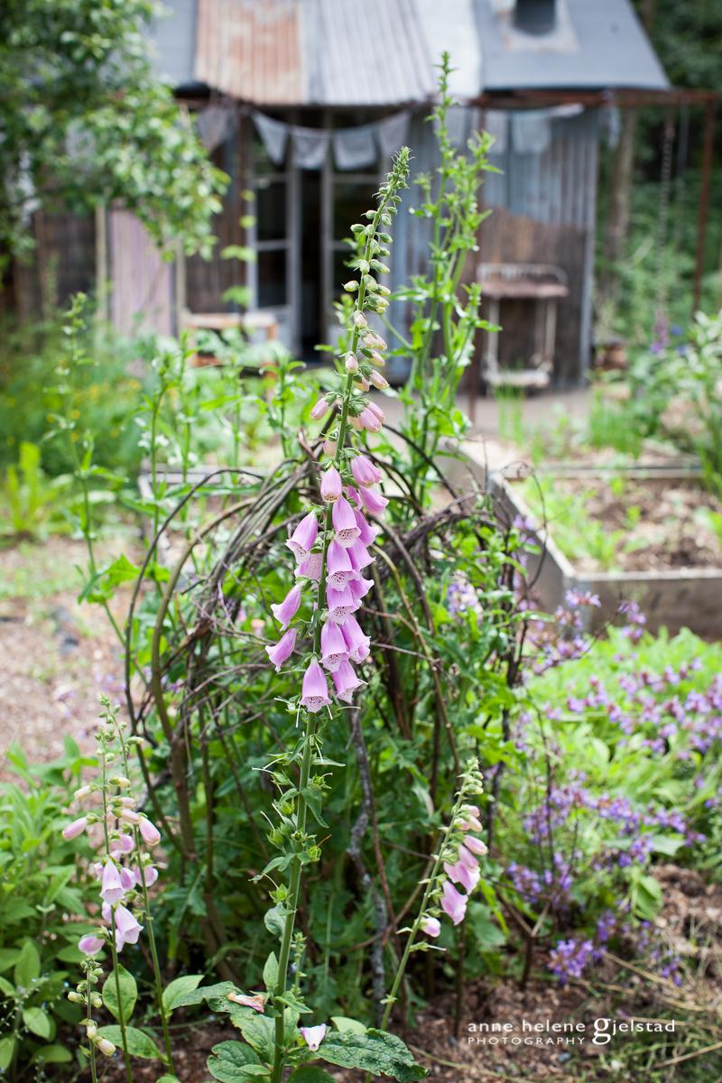 Anne_Helene_Gjelstad_www.annehelenegjelstad.com_fotograf_Bærum_08.jpg