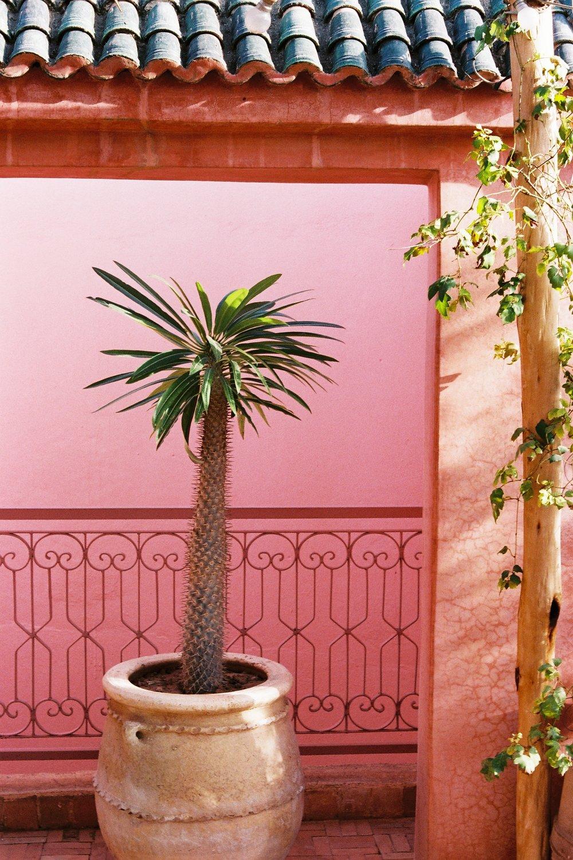 pink roof top on film (7).JPG