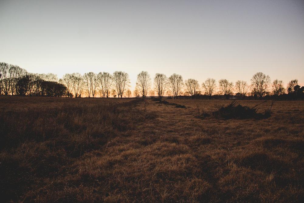 Midlands Horses-4.jpg